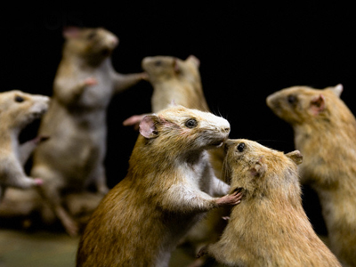 Window Display of Stuffed Rats at Aurouze