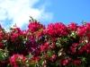The Secret Garden #2 – Cerita Ana AntarisaNugroho